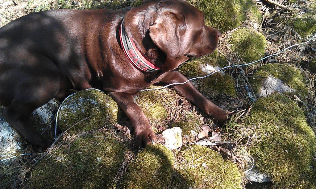 Tur hon är söt, den där chokladhunden...