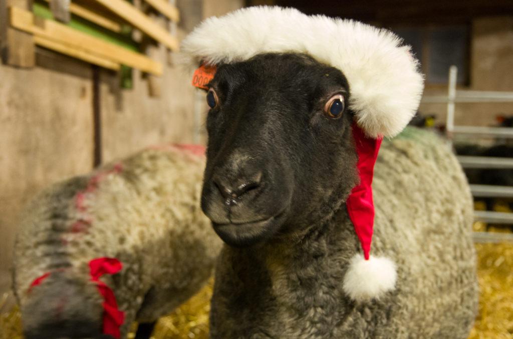 """God Jul önskar """"Femman"""" och alla vi andra på Sjögården!"""